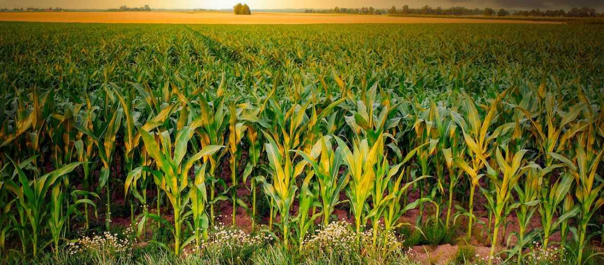 De digitalisering in de landbouw neemt een vlucht