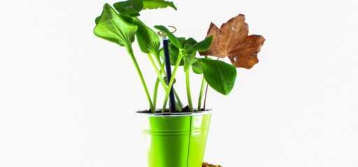Met deze stappen red je de plant die te veel water heeft gekregen